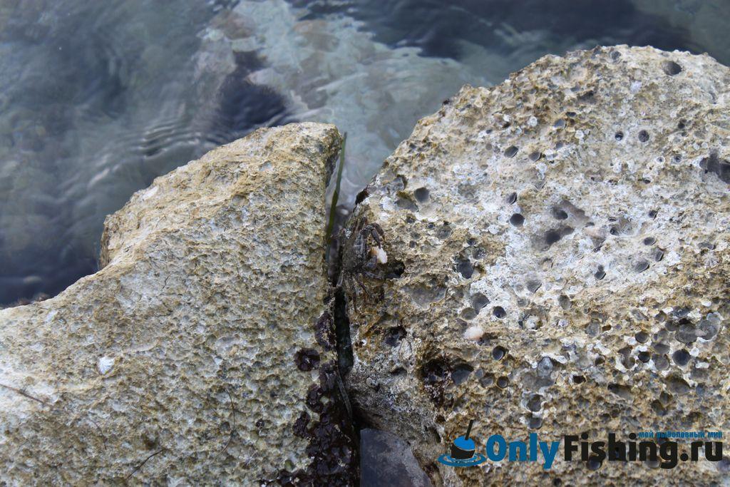 Фото с рыбалки на Корфу