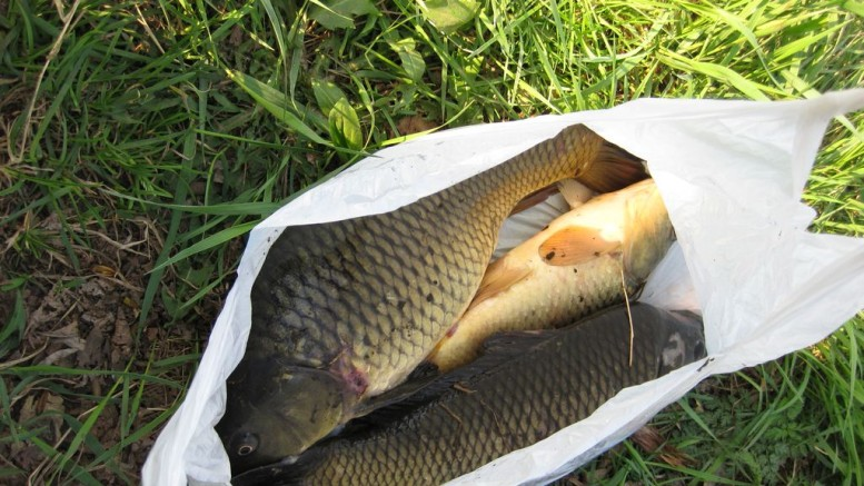 КРХ Белая Дача. Отчет о рыбалке