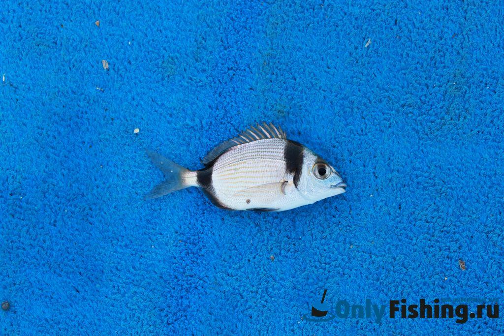 рыбалка в греции остров