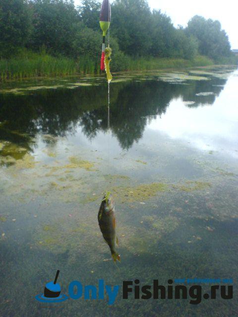 пруд алешинка рыбалка