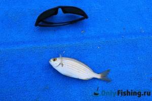 Рыбалка на Корфу с берега