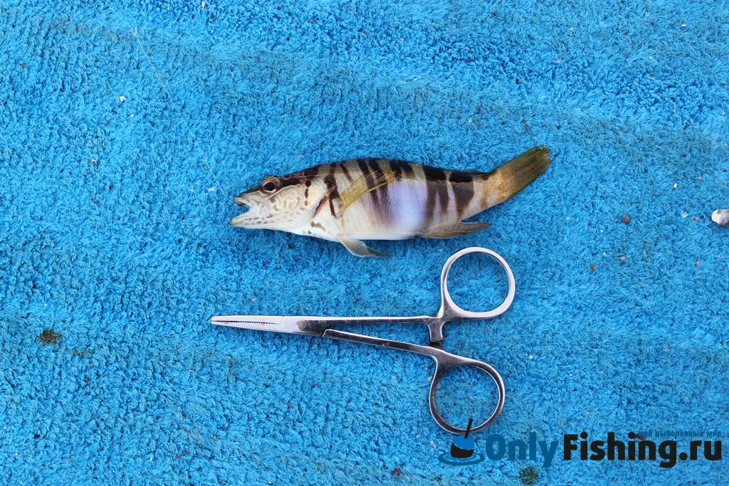 рыбалка тунец крит фото