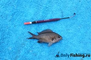 Рыбалка на Корфу. Фото
