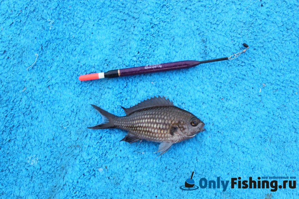 рыбалка на родосе видео