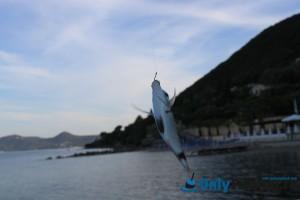 Рыбалка в Греции с берега