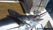 Морская рыбалка на Тенерифе