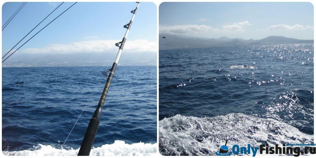 Рыбалка на Тенерифе. Отчет о рыбалке