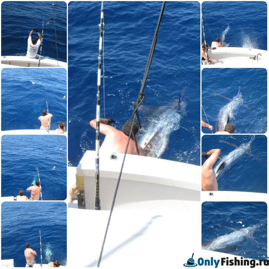 Синий Марлин. Морская рыбалка на Тенерифе