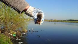 Алешинка, Ново-Переделкино. Отчет о рыбалке