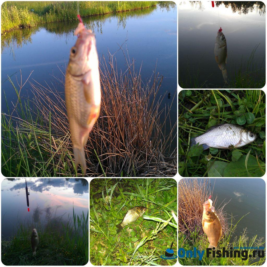 Ловля карася. Мой отчет о рыбалке.