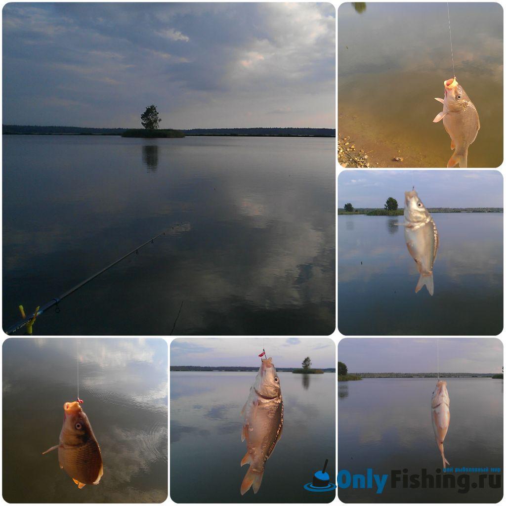 Платная рыбалка в Раково. Отчет о рыбалке