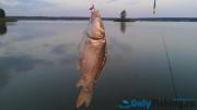 Раково. Платная рыбалка. Отчет о рыбалке