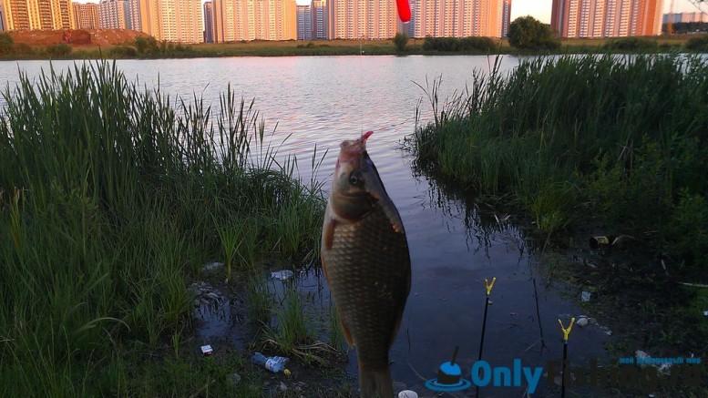 Река Алешинка, Ново-Переделкино. Рыбалка