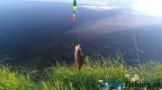 Рыбалка в Крекшино. Ловля окуня