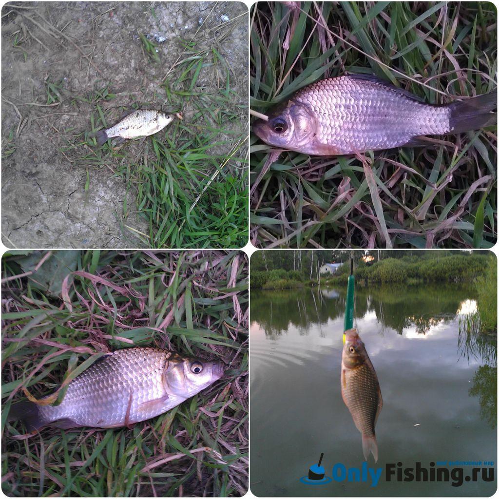 Отчет о рыбалке. Ловля карася во Внуково