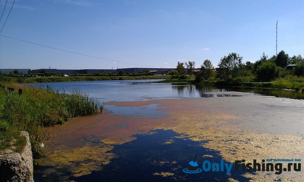 Река Алешинка, Крекшино