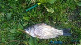 Рыбалка на реке Ликова. Ловля карася. Отчет о рыбалке