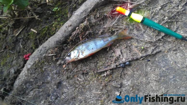 Самаринский пруд. Отчет о рыбалке