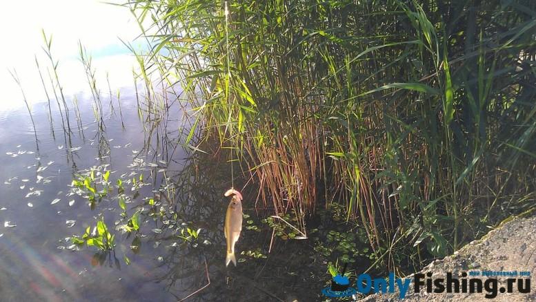 Теряево. Новая Рига. Отчет о рыбалке