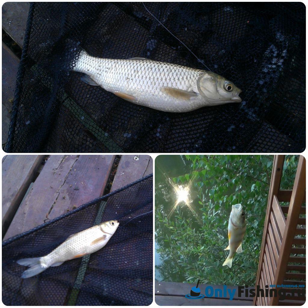 Улов на платной рыбалке