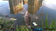 Река Сетунька рыбалка