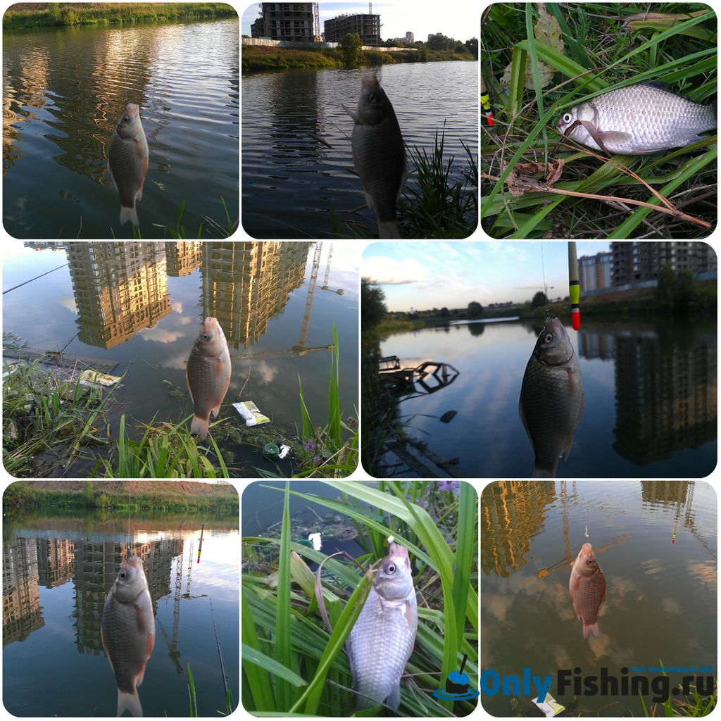 Река Сетунька рыбалка. Ловля карася