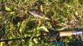 Рыбалка на Говоровском пруду. Ловля щуки. Ловля окуня