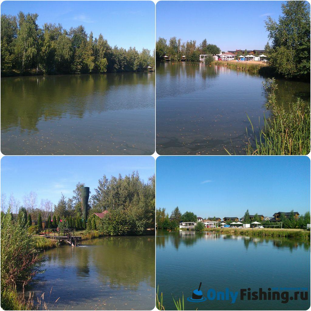 Пруд на платной рыбалке