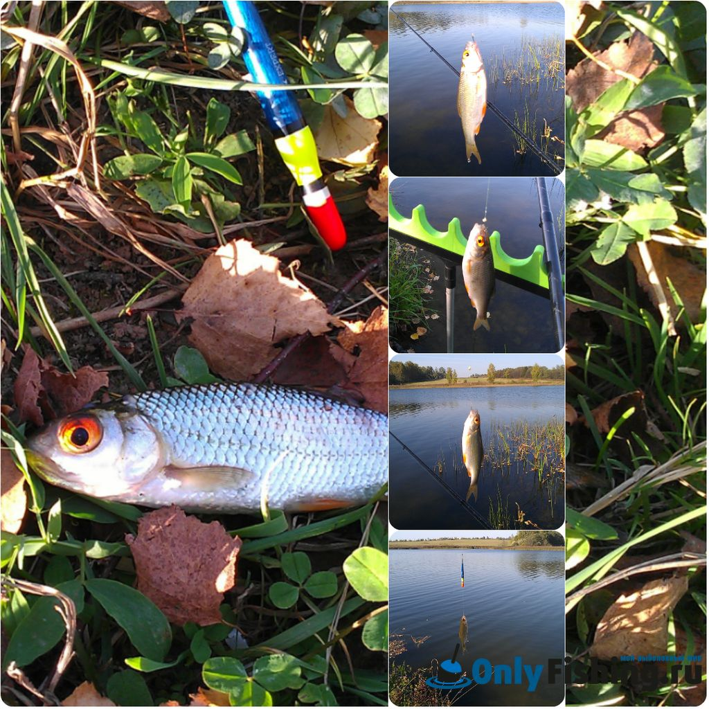 Ловля плотвы. Отчет о рыбалке