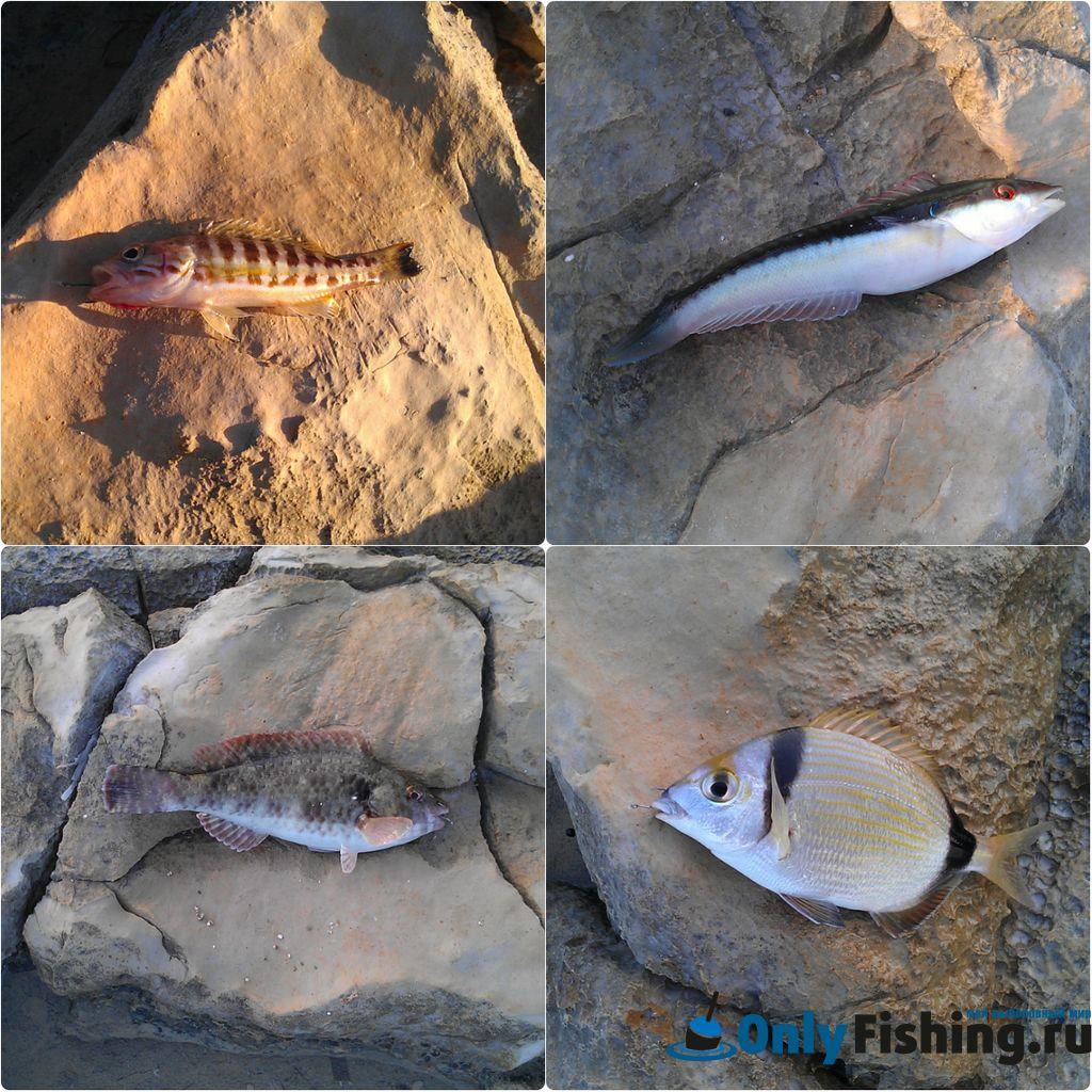 Рыба на Крите