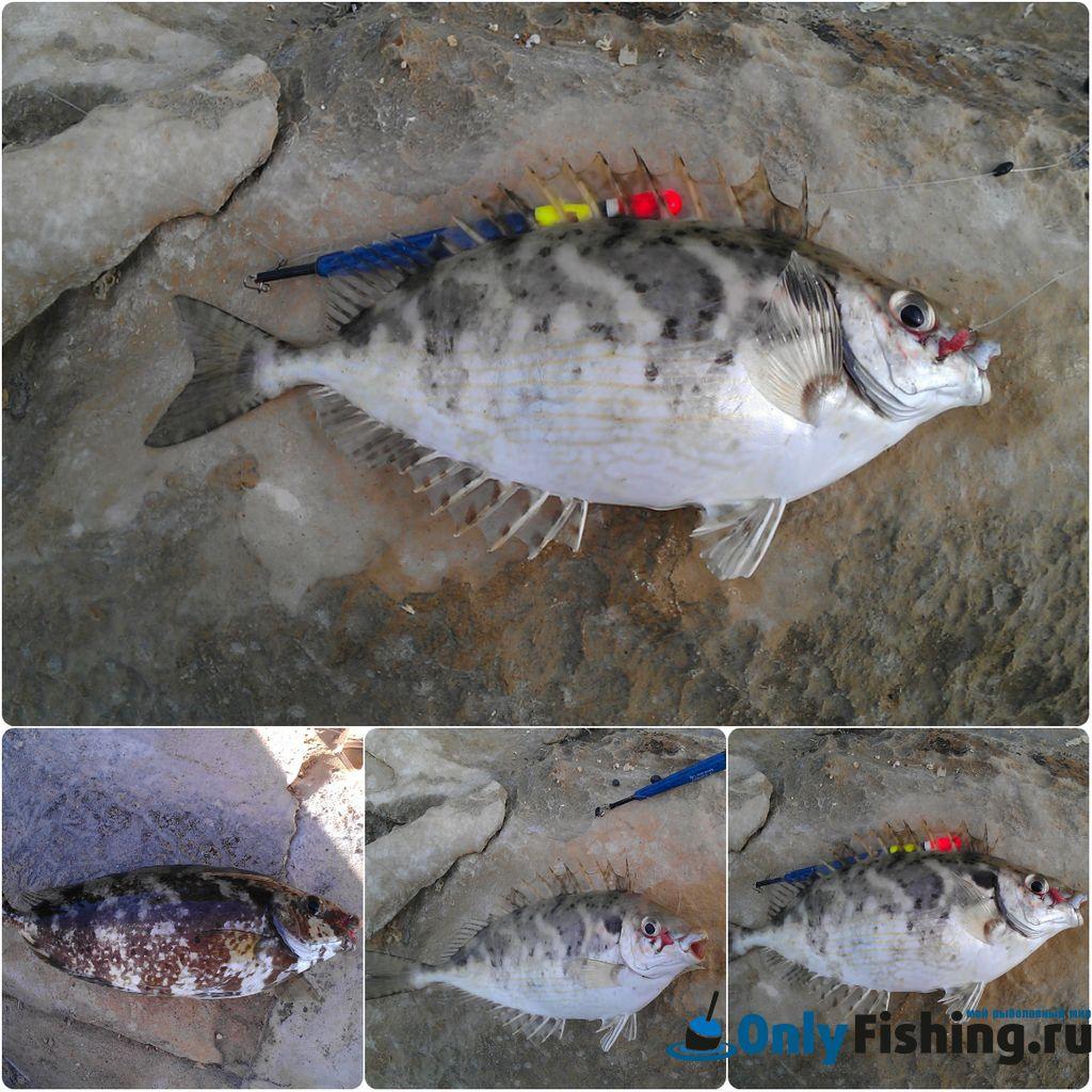 Рыбалка на Крите
