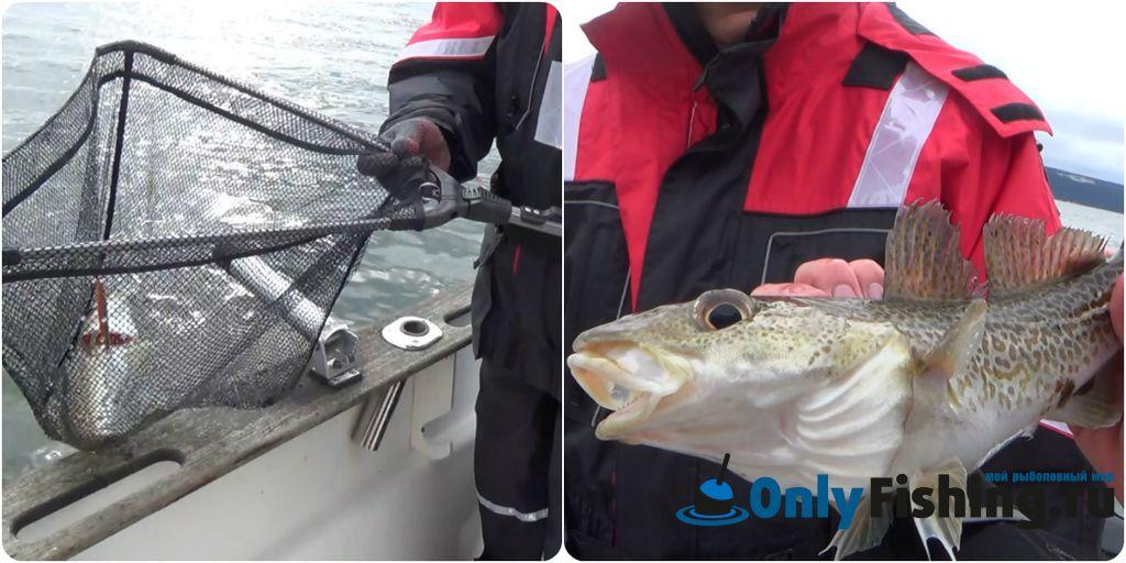 Фискэт, пойманный на рыбалке в Осло, на Осло-фьорде