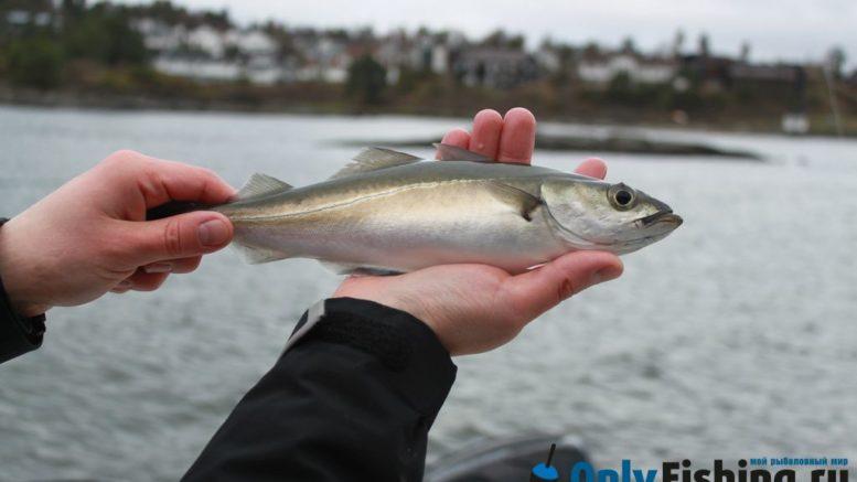 Рыбалка в Норвегии. Рыбалка в Осло, на Осло-фьорде