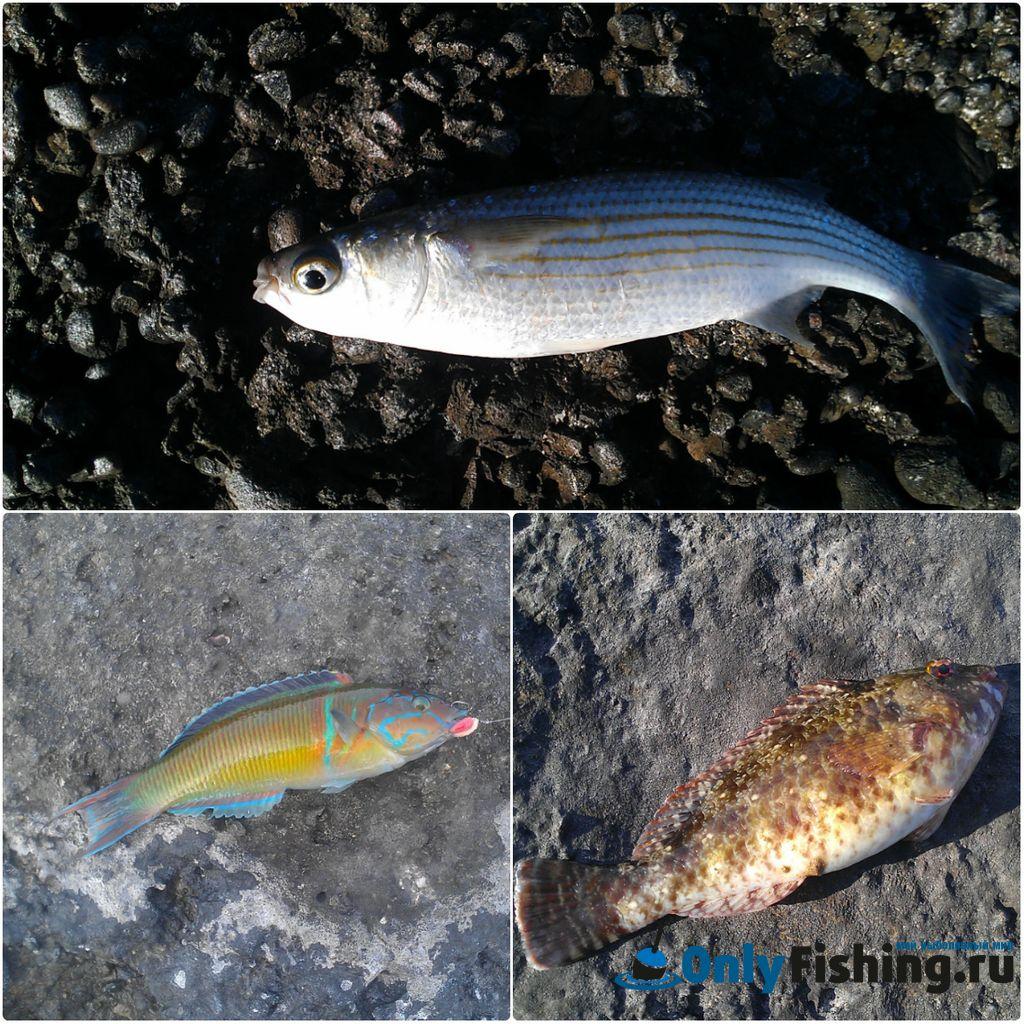 Рыбалка на Родосе - улов