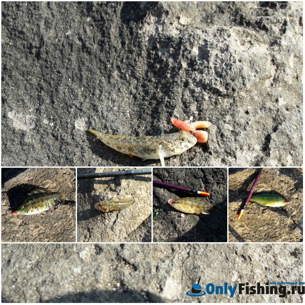Улов на моей рыбалке в Болгарии на море с берега