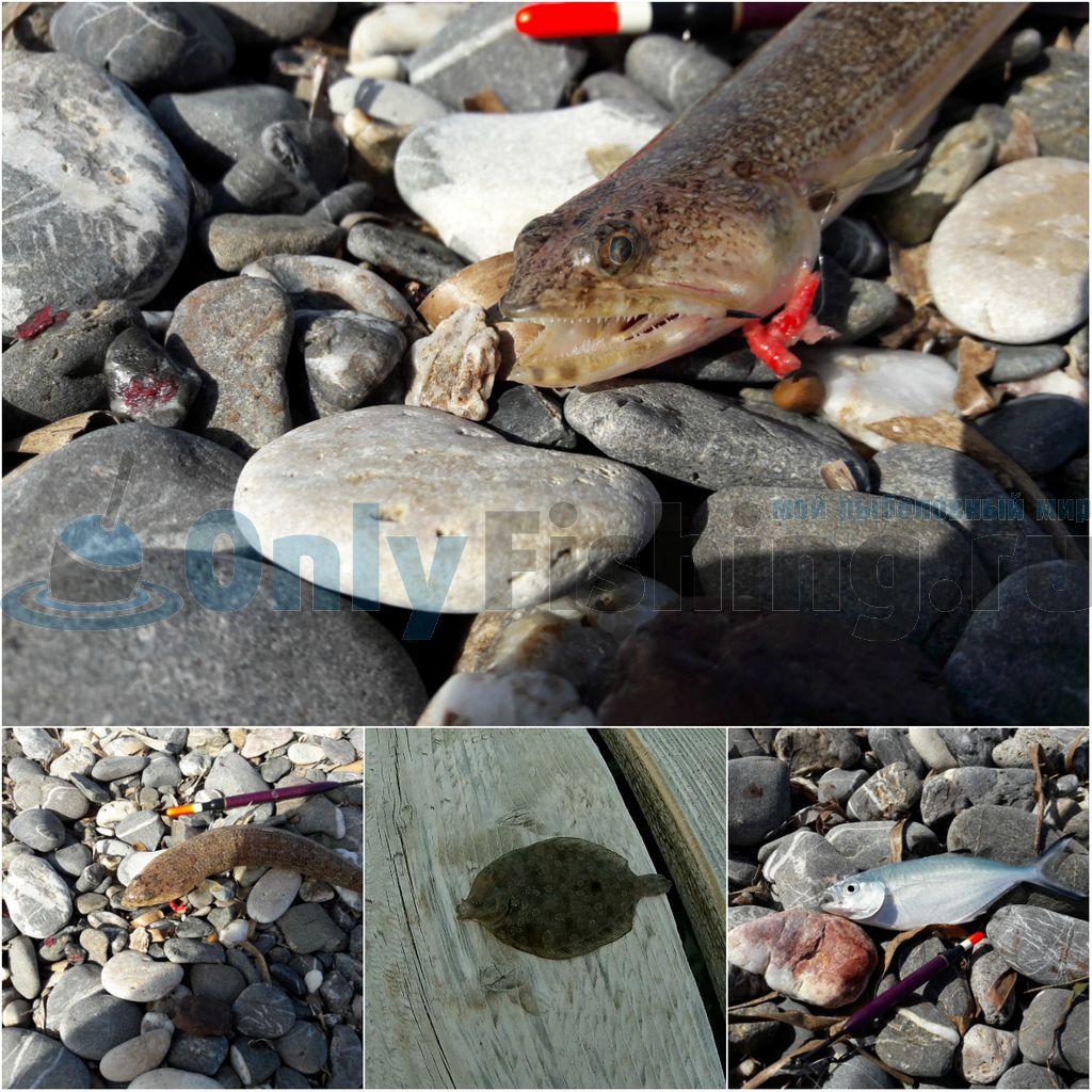 Новые виды рыб, пойманные на Косе