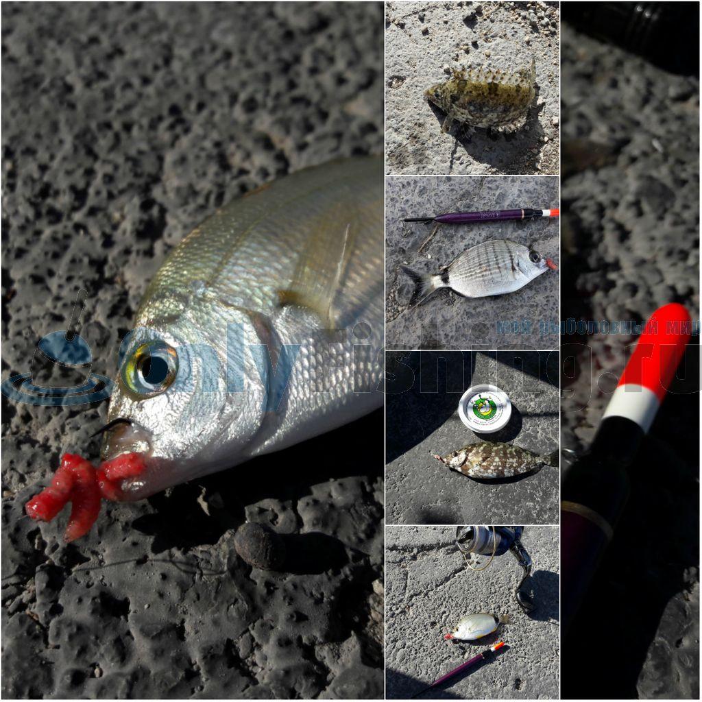 Рыбы, пойманные в порту города Коса