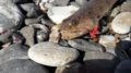 рыбалка на косе греция