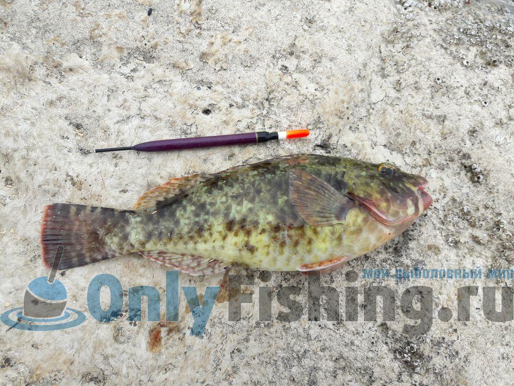 Рыба, пойманная на Крите