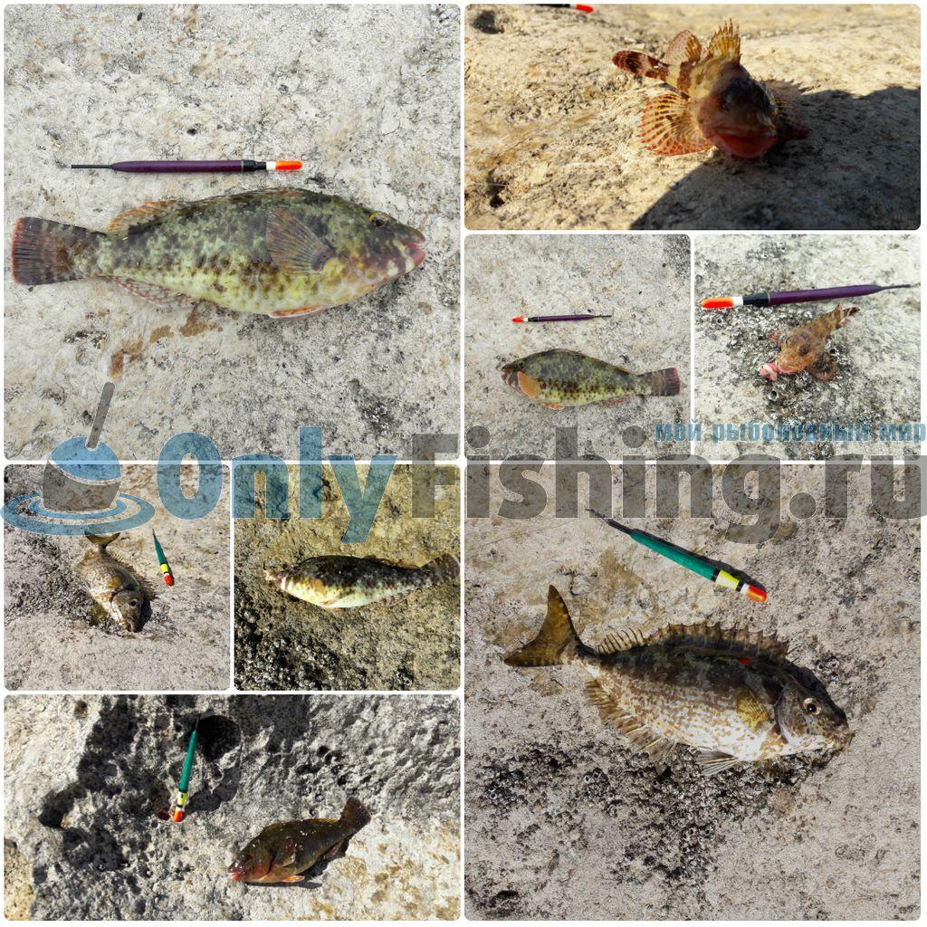 Рыбалка на Крите в 2019